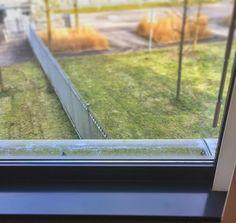 Luistervinken?  #meeting #atwork #eavesdropping #littlebird #birds #haveaniceday #tgif #behappy #thisismymessagetoyou #tweet #grass #green #pavement #fence #window #windowpane #windowsill #vogeltjes #goedkijken #afluisteren #spionage #espionage #ispy