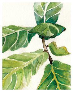 Fiddle Leaf fig Watercolor: Art Print Fiddle-leaf fig by versoART #Fiddleleaf #fiddleleaffig #botanicalart