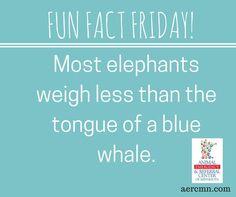 #FunFactFriday #AERC #TwinCitiesanimalhospital #elephantfacts #bluewhalefacts