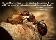 Srimad Bhagavatam on Maintenance of All Living Entities