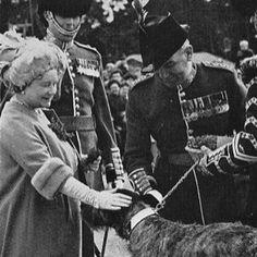Irish Wolfhound and the Queen Mum