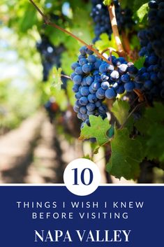 Napa Valley first time visitors; what to know before going to Napa Valley; Napa Valley tips; major wineries in Napa Valley; tips for visiting Napa Valley Usa Travel Guide, Travel Usa, Travel Tips, Travel Guides, Travel Destinations, Canada Travel, Florida Keys, Burger Laden, Napa Valley Wineries