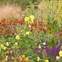 Garden Ideas Border Ideas Perennial Planting Perennial