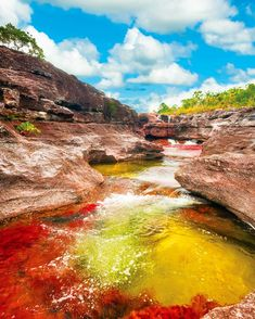 Also known as the River of Five Colors or the Liquid Rainbow Caño Cristales in #Colombia is crystal clear allowing for the vivid colors emanating from the quartzite rocks below to surface and become visible. Studded with rapids and waterfalls the river also offers places to stop for a swim. Book your tour of this beautiful waterway on TripAdvisor.