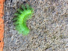 verde perico y filamentos