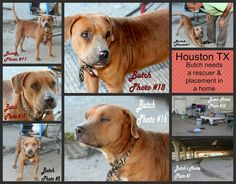 10/29/14 Houston TX: Has pledges but NO RESPONSE! RE: Urgent Need a foster/rescue group/home for the other dog the Homeless Man has.