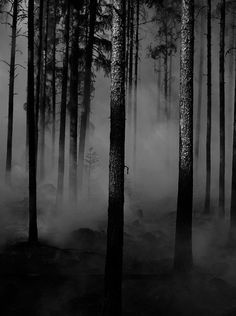 Black and White landscape trees Black & White nature forest natural fog dark forest gloomy branches mistery dark trees b&w photography dark landscape dark nature dark branches b&w fog dark fog black and white dark