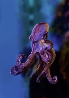 Good Lookin Octopus