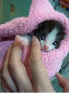 baby cat in a big fluffy blanket