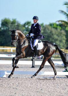 young horse dressage championship - Поиск в Google