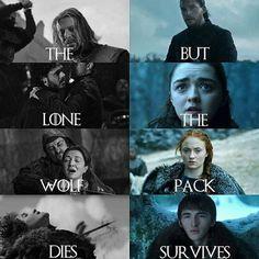 Game Of Thrones Memes 2019 - The but lone the wolf pack dies survives - Hintergrundbilder Art Game Of Thrones Books, Game Of Thrones Facts, Got Game Of Thrones, Game Of Thrones Quotes, Game Of Thrones Funny, Khal Drogo, Disney Memes, Game Of Throne Lustig, Jon Snow