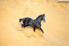 Beautiful Horse Pictures, Beautiful Horses, Animals Beautiful, Marwari Horses, Indian Horses, Horse Ears, Majestic Horse, All The Pretty Horses, Equine Photography