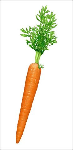 one carrot - Google Search