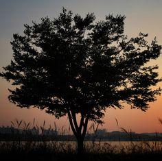 한강, 나무