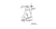 Viva el verano! #pinterest #gato #celestian