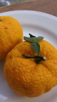 Yuzu, Japanese Winter Citrus for Soup, Salad, Tsukemono Pickles or Bath Float in Onsen Spa|ゆず