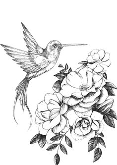 Realistic Pencil Drawings, Cool Art Drawings, Animal Drawings, Tattoo Drawings, Pencil Tattoo, Vogel Tattoo, Flower Line Drawings, Instagram Cartoon, Bird Coloring Pages