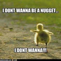 Chicken Run Funny Animal Quotes Cute Funny Animals Funny Animal Pictures Funny Cute