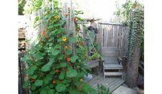 Heinäseipäistä näkösuojaa Outdoor Structures, Garden Ideas, Backyard Ideas