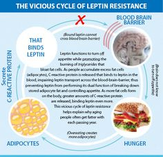 The Vicious Cycle of Leptin-Insulin Resistance Der Teufelskreis der Leptin-Insulinresistenz Leptin Diet, Metabolic Diet, C Reactive Protein, Leptin Resistance, Healthy Diet Tips, Healthy Eating, Paleo Diet, Healthy Cooking, Healthy Lifestyle