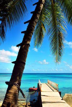 Vaiaku, Funafuti, Tuvalu | 1547 Idyllic | 18 August 2011: a palm tree and a jetty, Vaiaku, Fongafale Islet, Funafuti Atoll, Tuvalu