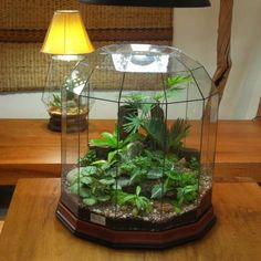 Here's a closed terrarium in a cool shaped domed glass holder.