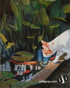 1000 images about the black cat and friends on pinterest for Koi pond maine coon cattery