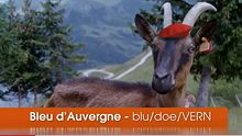 Say What? A video to cheese pronunciation from some goats.  Ever at a loss for words in the cheese shop? Here are the proper pronunciations for twelve of the most tongue-twisting cheeses on the shelf: Bleu d'Auvergne, Cabecou, Chabichou du Poitou, Epoisse de Bourgogne, Fleur du Maquis, Garrotxa, Gjetost, Hoch Ybrig, Idiazabal, Vacherin Mont d'Or, Ossau-Iraty, and Valencay.  Straight from the, er, horse's mouth.