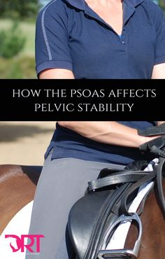 How the psoas affects your pelvic stability in dressage