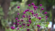 15 Plants That Bloom All Summer Long Flower Garden Plans, Garden Yard Ideas, Garden Projects, Garden News, Shade Loving Flowers, Beautiful Flowers, Container Flowers, Container Plants, Succulent Containers