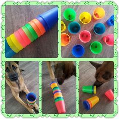 Brain Game – Place a treat inside plastic cups and stack up and let your Dog… Brain Game – Place a treat inside plastic cups and stack up and let your Dog find the treats. Brain Games For Dogs, Dog Games, Diy Pour Chien, Dog Boredom, Pet Sitter, Dog Enrichment, Diy Dog Toys, Homemade Dog Toys, Dog Puzzles