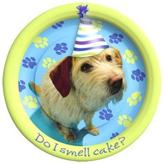Party Pups Dessert Plates count) Description: Do I smell cake? This package includes 8 Party Pups paper Dessert Plates. Don't forget to check out our Party Pups Puppy Birthday Parties, Birthday Plate, Puppy Party, Dog Birthday, Birthday Ideas, Happy Birthday, Birthday Banners, Animal Birthday, Birthday Supplies