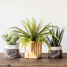 Plant and succulent styling decor ideas | Yellow and White Cotton Bread Basket with Striped Print