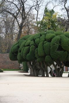 Parque del Retiro, Madrid  Spain Arbor Tree, Rock Of Gibraltar, Europe Holidays, Weird Pictures, Andalucia, Spain Travel, Hedges, Amazing Gardens, Mother Nature