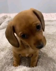 Cute Baby Animals, Funny Animals, Cute Animal Pictures, Dog Friends, Pet Birds, Fur Babies, Cute Dogs, Dogs And Puppies, Labrador Retriever