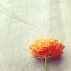 perfect colour pallet - white, soft grey and orange