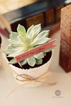 21 Best First Birthday Party Favor Images Succulents Wedding