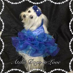 Brigitte com o Vestido que leva o nome dela. Conheça o Ateliê Dogs in Love https://www.facebook.com/ateliedogsinlove/