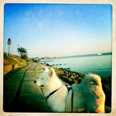 Silas Early morning - zzz Early Morning, My Eyes, Husky, Phone, Dogs, Animals, Animales, Animaux, Telephone