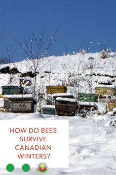"""One of the many questions I get about keeping honeybees in Saskatchewan is """"How do they survive the winter?"""" Well, for winter, I wrap them up snug as a bug in a rug. Canadian Winter, Canadian Food, Health Programs, Left Alone, Pet Care, Spring Time, Survival, Bee, Tours"""