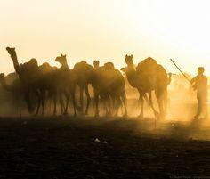 Colección India | Poèpics Agra, India, Varanasi, Laos, Vietnam, Camel, Thailand, Travel Photography, Animals