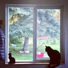 It's a black cat battle who ignores humans better? The left side wooden cat or the right side real cat? #blackcat #catsofinstagram #Alaska