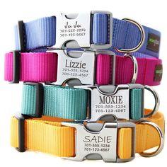 Dog collars w/ name. No more jingle from his dog tag!!