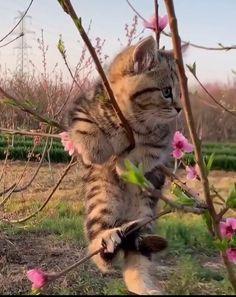 С Добрым Утром!Заходите на чай! :) — Разное   OK.RU Cats, Animals, Gatos, Animales, Kitty Cats, Animaux, Animal Memes, Cat Breeds, Kitty