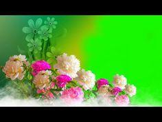 Green Screen Flowers Effect Background   Green screen background.