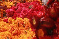 La festividad de Día de Muertos esta llena de color, sabor y aromas. FOTO: @germanromero11