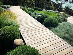 Dromana boardwalk after a fresh trim #dromana #coastalgarden #nathanburkettdesign