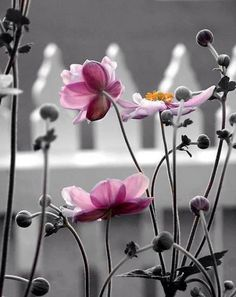 "Ana Rosa / ""splash"" of color #pink flowers"