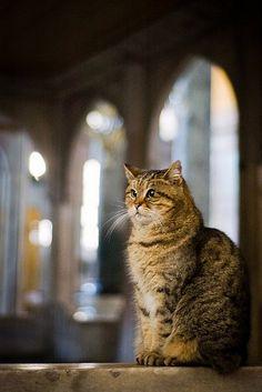 Кот по имени Гли - известный сожитель в Соборе Святой Софии, Айя-София Turkey Art, Animals, Culture, Facebook, Cats, Animales, Animaux, Animal, Animais