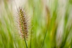 Fine Grass by ChristianThür Photography on Creative Market
